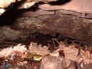 avon gorge ians cave, bristol, united kingdom (uk).