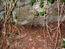 avon gorge paedophilesrock shelter, bristol, united kingdom (uk).