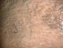 ravens well tunnel eel, bristol, united kingdom (uk).